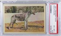 Wolfhound [PSA6.5]