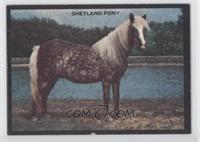Shetland Pony [GoodtoVG‑EX]