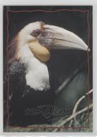 Animal Trivia Cards - The Hornbill