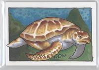 James Bukauskas (Sea Turtle) /1