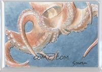 Jared Souza (Octopus) /1