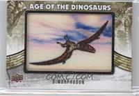 Extinct (Air/Sea) - Dimorphodon