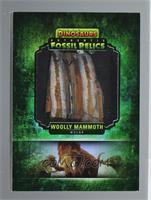 Woolly Mammoth Molar