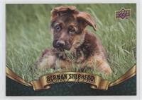 Puppy Variant - German Shepherd
