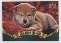 Puppy Variant - Shiba Inu