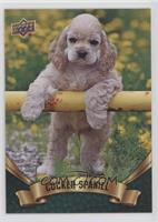 Puppy Variant - Cocker Spaniel