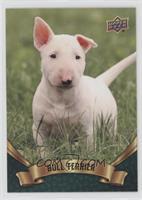 Puppy Variant - Bull Terrier