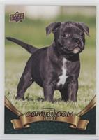 Puppy Variant - Staffordshire Bull Terrier
