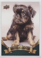 Puppy Variant - Brussels Griffon